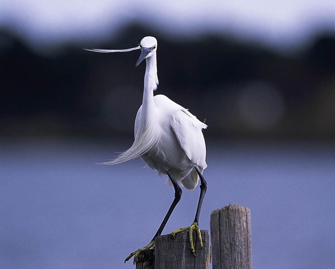 Casa di l'onda lac egrette et animaxu